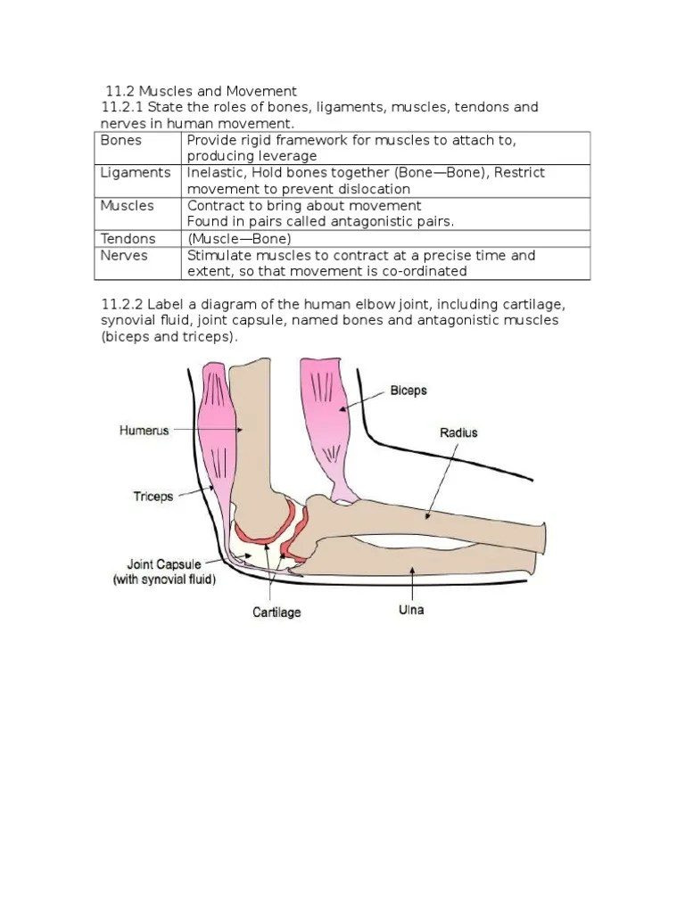 Brief Outline Ankle Fracture