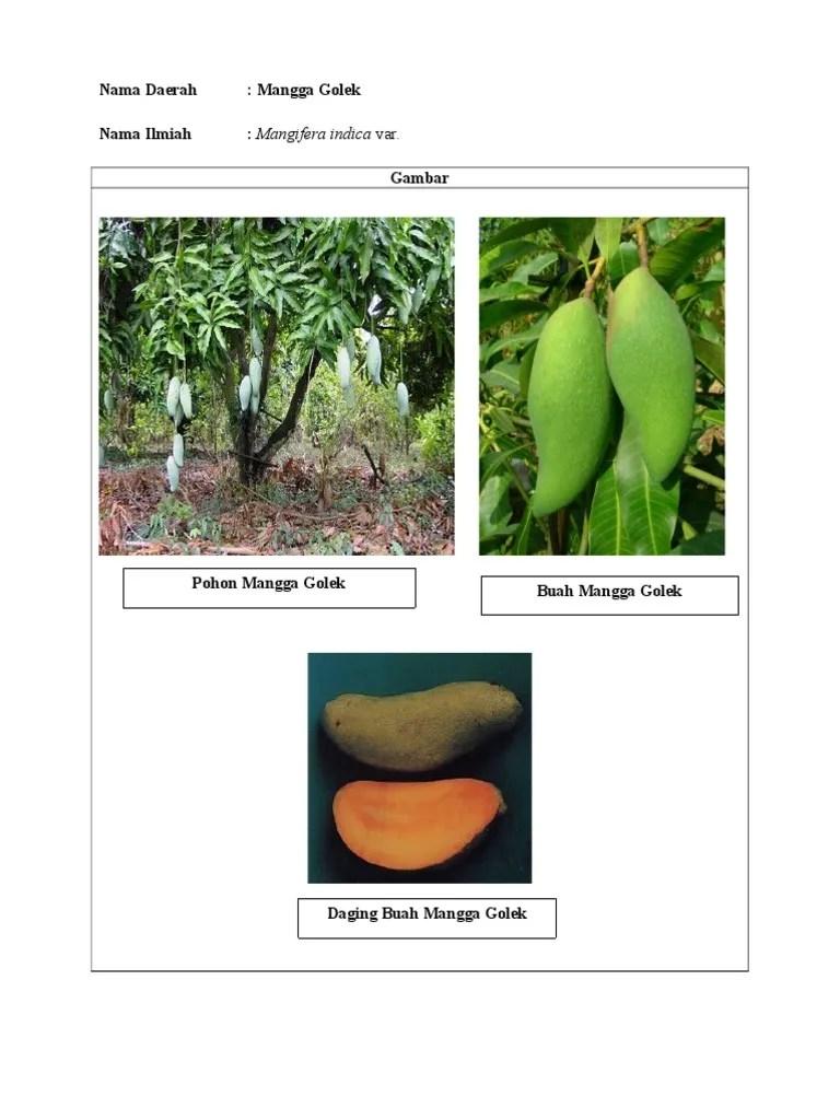 Nama Latin Pohon Mangga : latin, pohon, mangga, MANGGA.docx