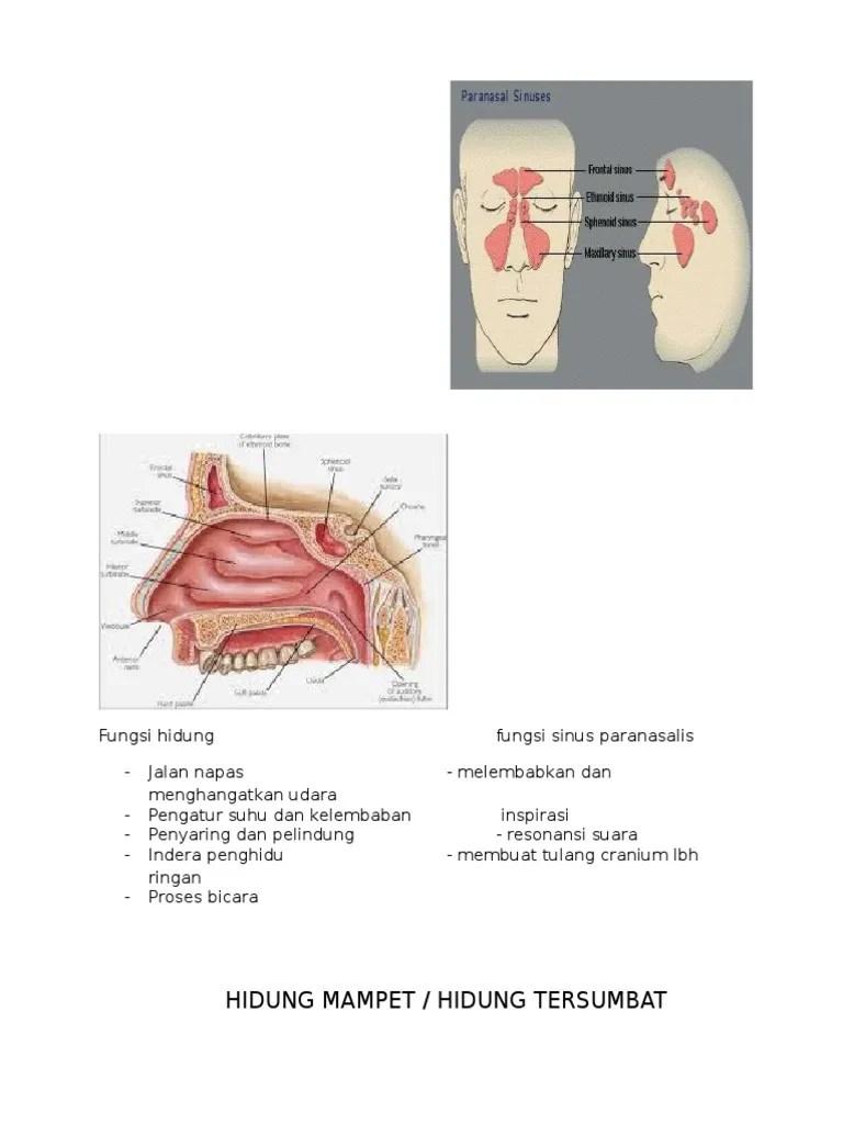 Anatomi Hidung Dan Fungsinya : anatomi, hidung, fungsinya, Hidung, Tersumbat