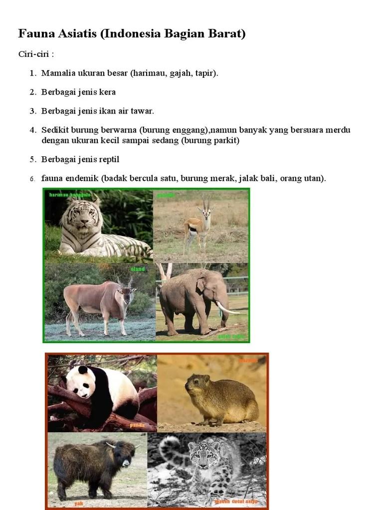 Ciri Ciri Fauna Indonesia Bagian Barat : fauna, indonesia, bagian, barat, Fauna, Asiatis, (Indonesia, Bagian, Barat)