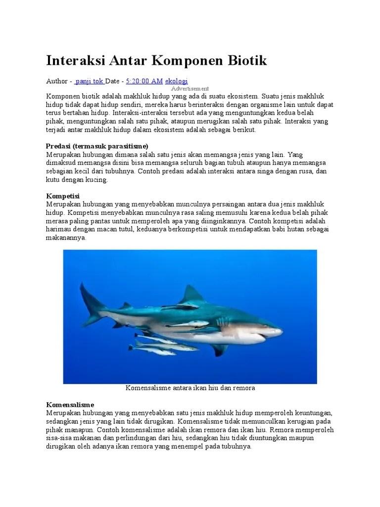 Ikan Hiu Dan Ikan Remora : remora, Gambar, Dengan, Remora, Hewan