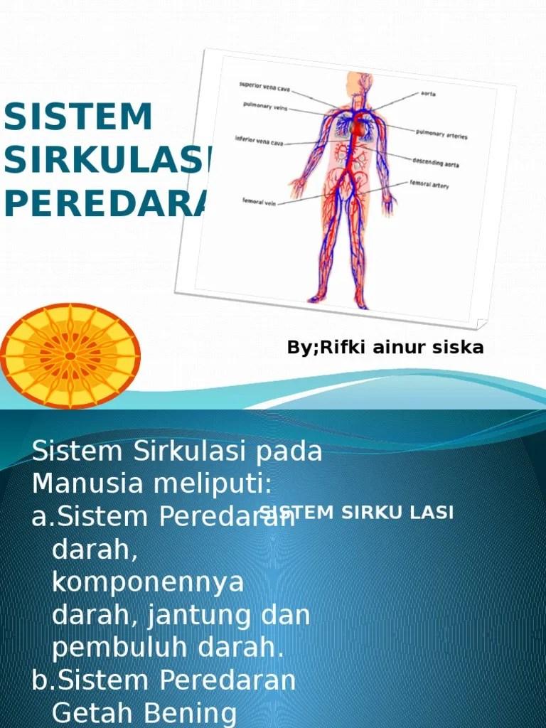Peredaran Darah Getah Bening : peredaran, darah, getah, bening, Sistem, Peredaran, Darah
