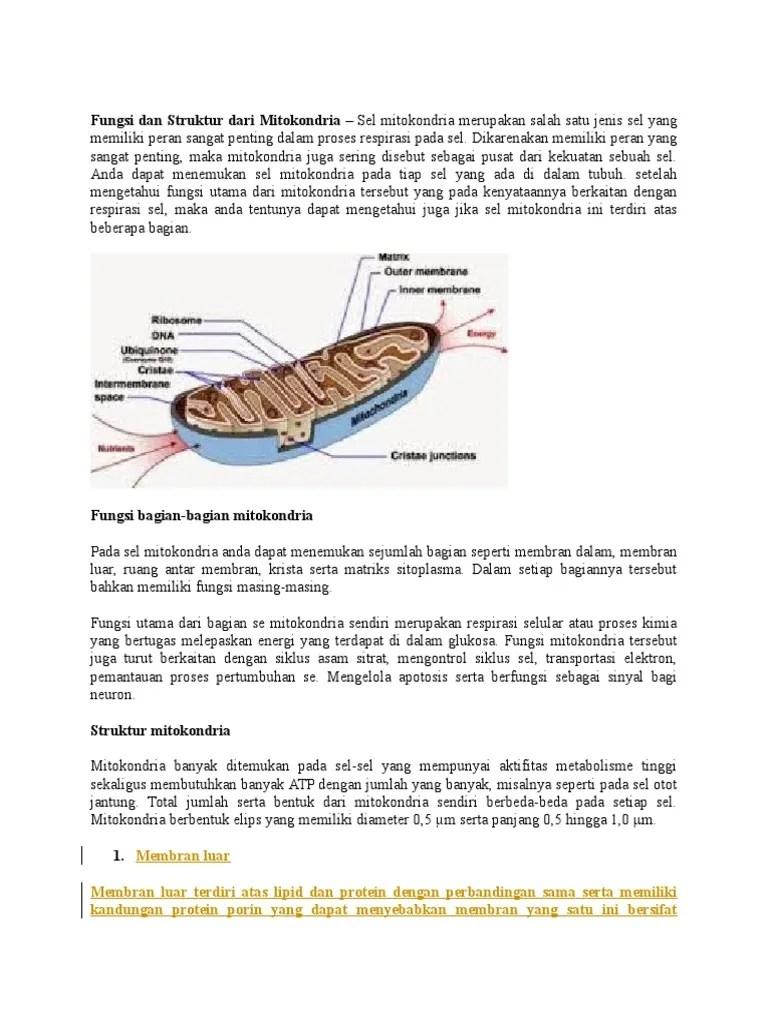 Gambar Mitokondria Dan Bagiannya : gambar, mitokondria, bagiannya, Fungsi, Struktur, Mitokondria