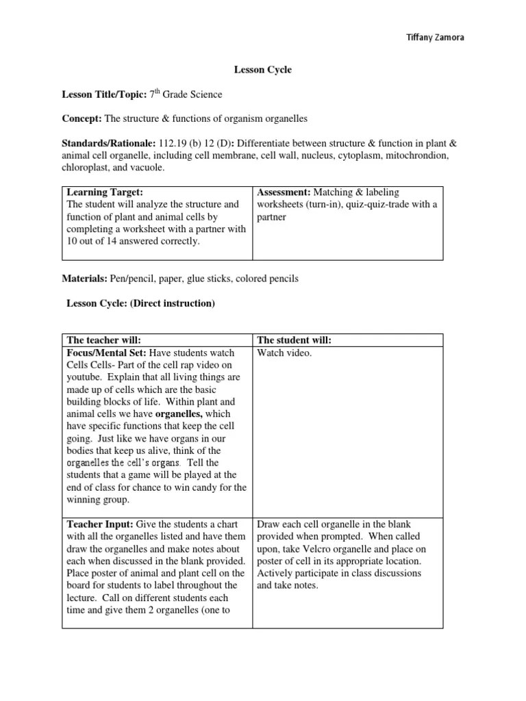 small resolution of plant and animal cells lesson plan   Cytoplasm   Vacuole