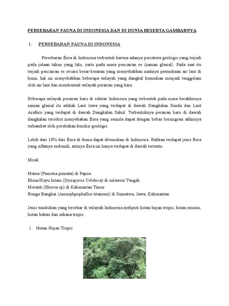 Hutan Musim: Pengertian - Ciri - Jenis dan Persebarannya