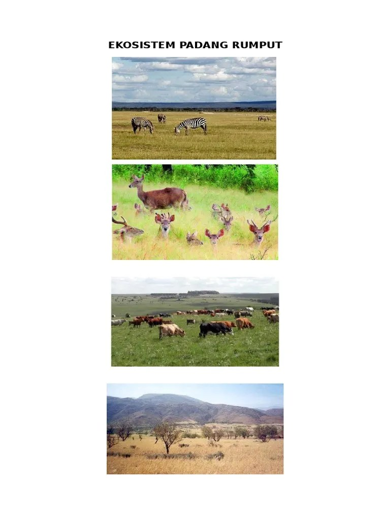 Gambar Ekosistem Padang Rumput : gambar, ekosistem, padang, rumput, Ekosistem, Padang, Rumput