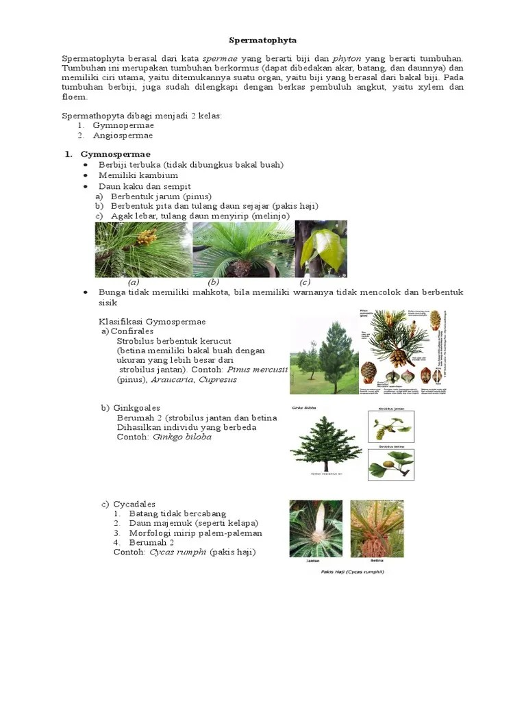 Contoh Tanaman Berbiji Terbuka : contoh, tanaman, berbiji, terbuka, Paling, Keren, Gambar, Bunga, Melinjo, Jantan, Betina