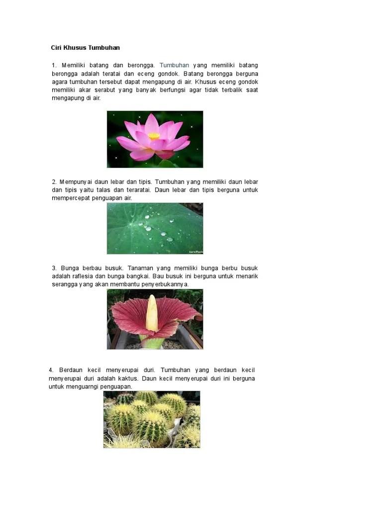 Ciri Khusus Eceng Gondok : khusus, eceng, gondok, Gambar, Khusus, Hewan, Tumbuhan, Fungsinya, Lengkap, Eceng, Gondok, Rebanas