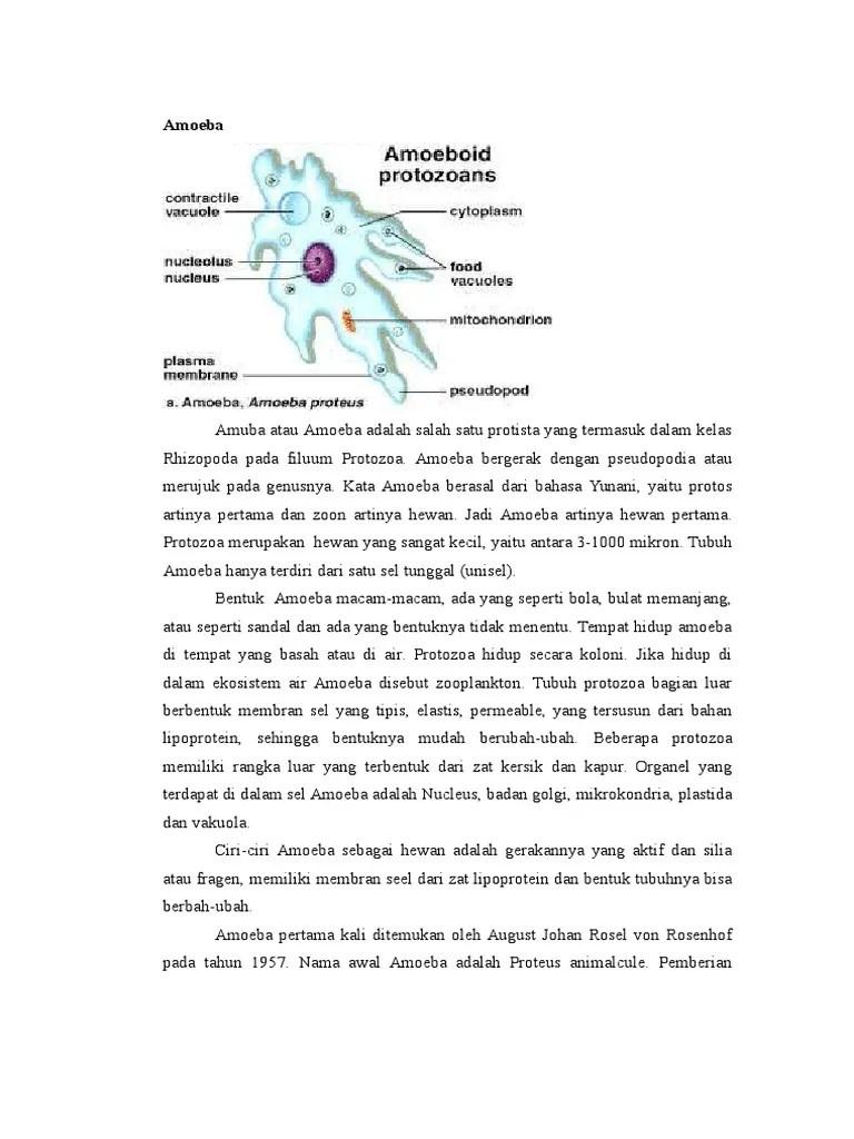 Bagaimana Cara Amoeba Bergerak - Sridianti.com