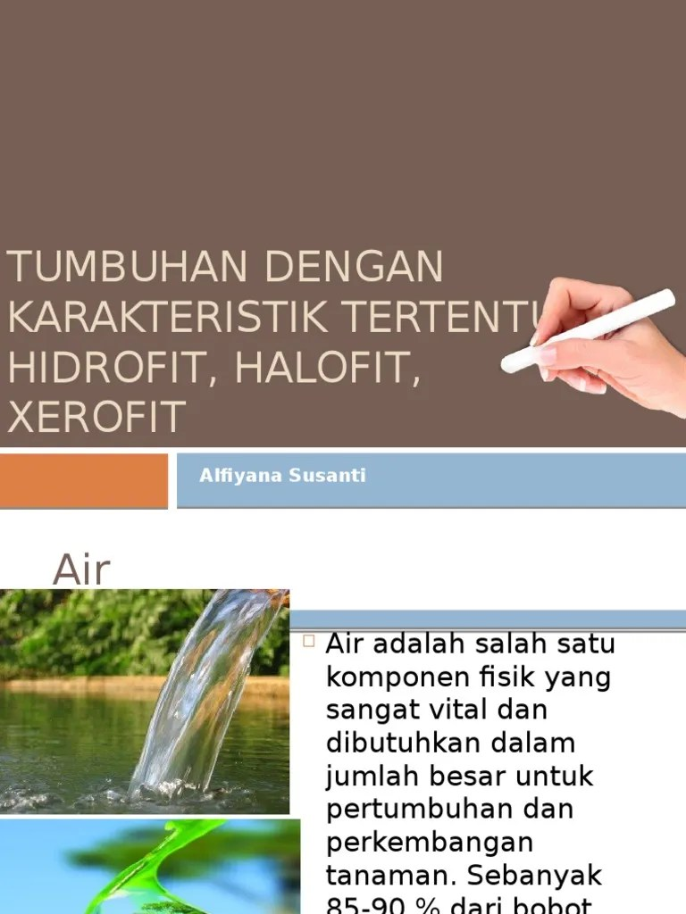 Tanaman Hidrofit : tanaman, hidrofit, Tanman, Hidrofit,, Higrofit,, Xerofit