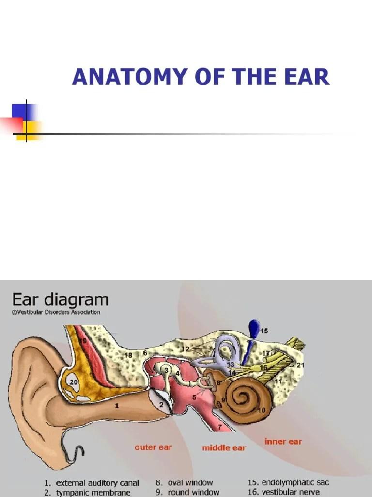 medium resolution of inner ear diagram