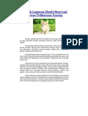 Teks Deskripsi Tentang Kucing : deskripsi, tentang, kucing, Contoh, Laporan, Hasil, Observasi, Tentang, Hewan, Peliharaan, Kucing, Berbagai, Penting