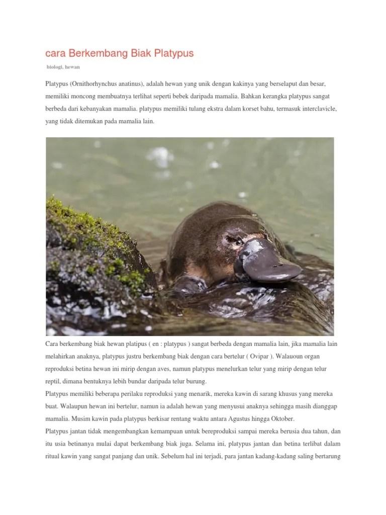 Platypus Ovovivipar : platypus, ovovivipar, Gambar, Hewan, Mamalia, Platypus, Terbaru