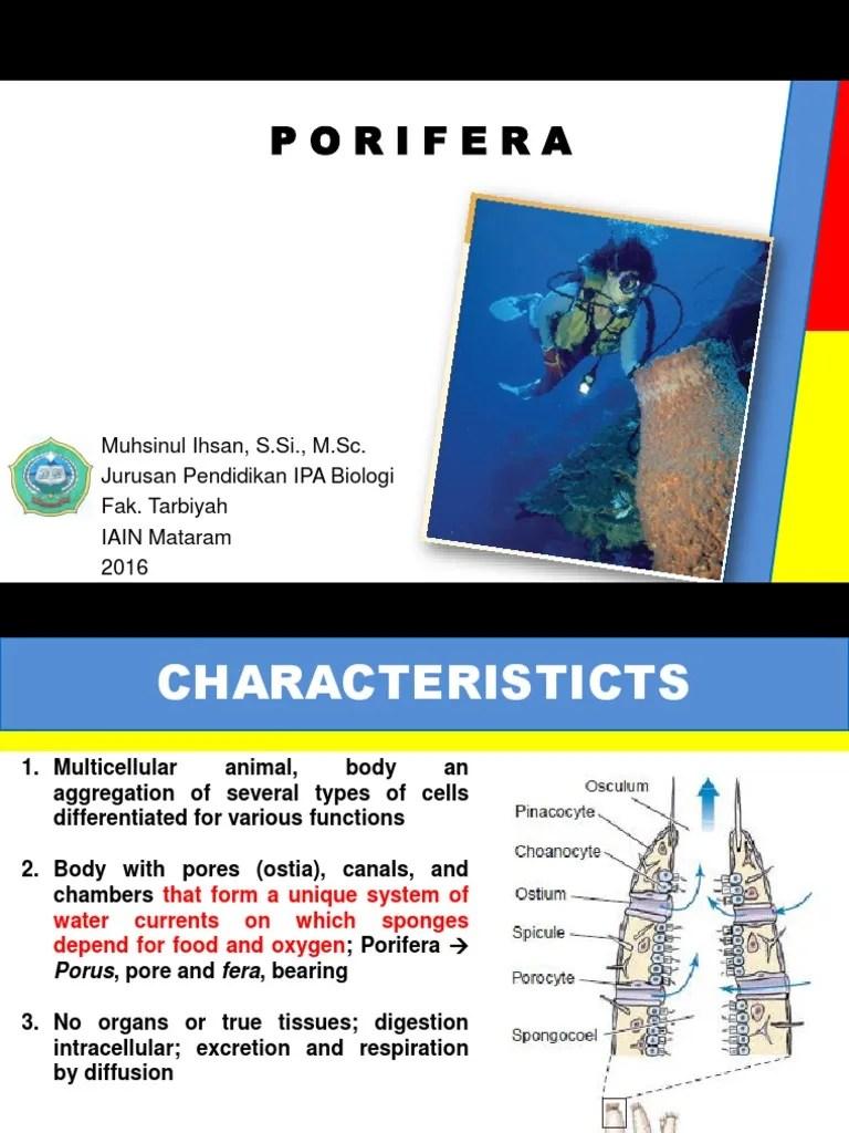 Saluran Air Pada Porifera : saluran, porifera, Pertemuan, (Porifera), Sponge, Sexual, Reproduction
