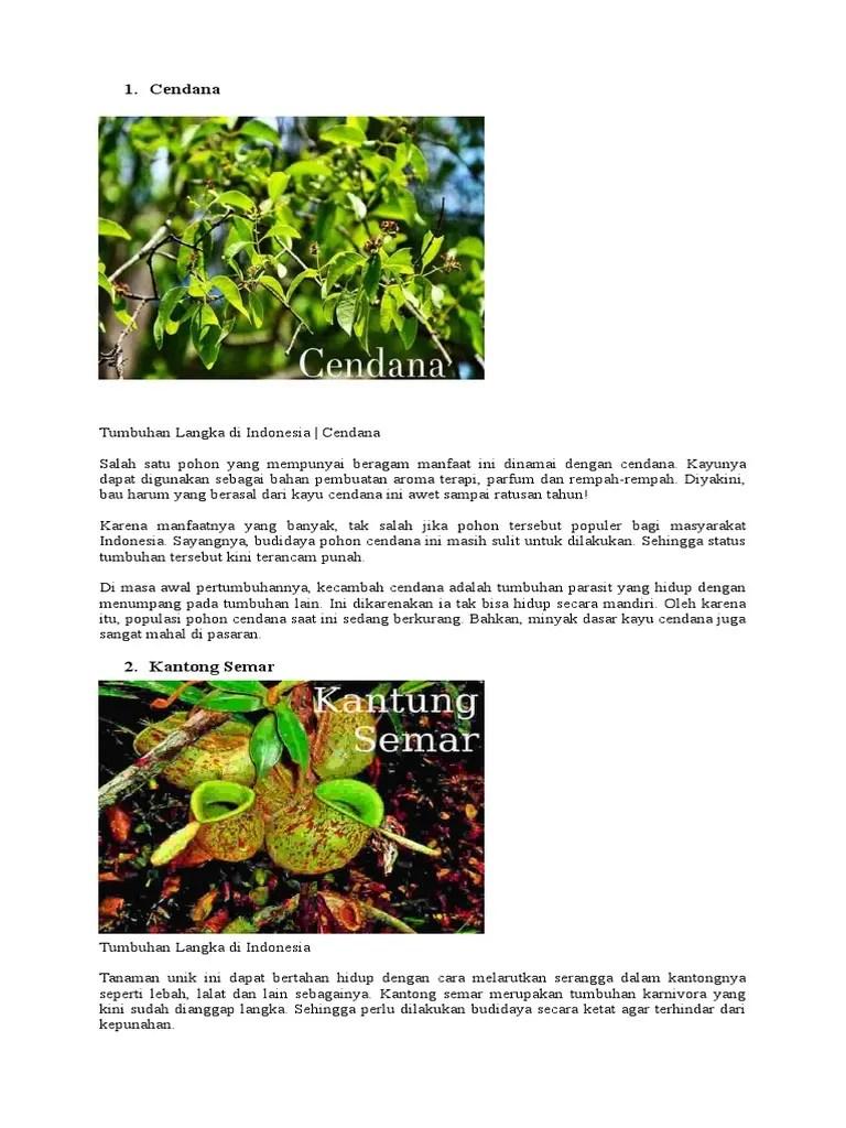 Pohon Cendana Dan Manfaatnya : pohon, cendana, manfaatnya, Flora