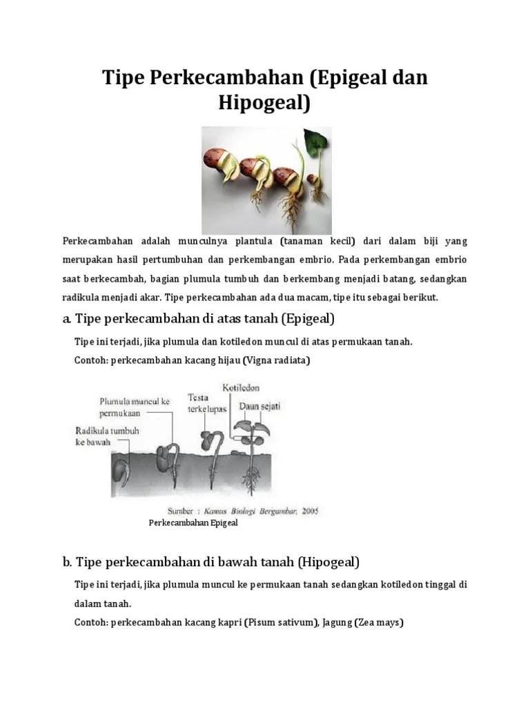 Perkecambahan hipogeal dan - SlideShare