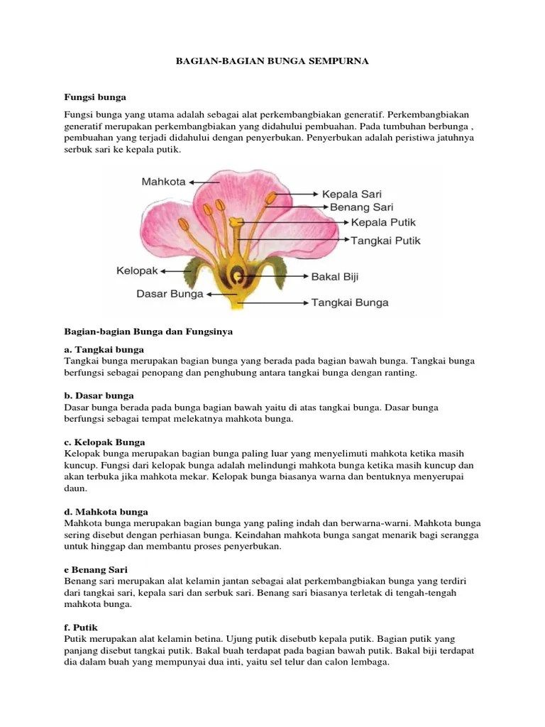 Gambar Bunga Dan Bagiannya : gambar, bunga, bagiannya, Terbaru, Gambar, Bunga, Bagian, Bagiannya, Lengkap, Beserta, Fungsinya, Indah