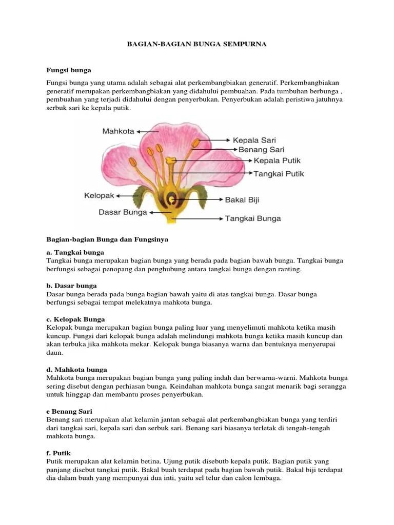 Bagian Bagian Bunga Sempurna : bagian, bunga, sempurna, Bagian, Bunga, Sempurna
