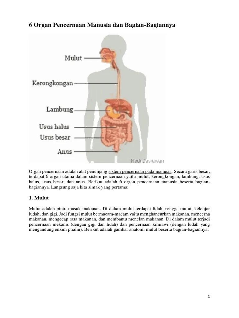 Gambar Usus Halus Dan Bagian Bagiannya : gambar, halus, bagian, bagiannya, Organ, Pencernaan, Manusia, Bagian