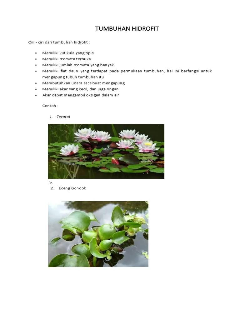 Contoh Tumbuhan Hidrofit : contoh, tumbuhan, hidrofit, TUMBUHAN, HIDROFIT