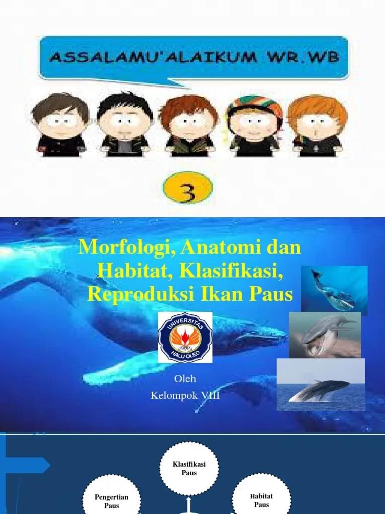 Perkembangbiakan Ikan Paus : perkembangbiakan, Presentasi