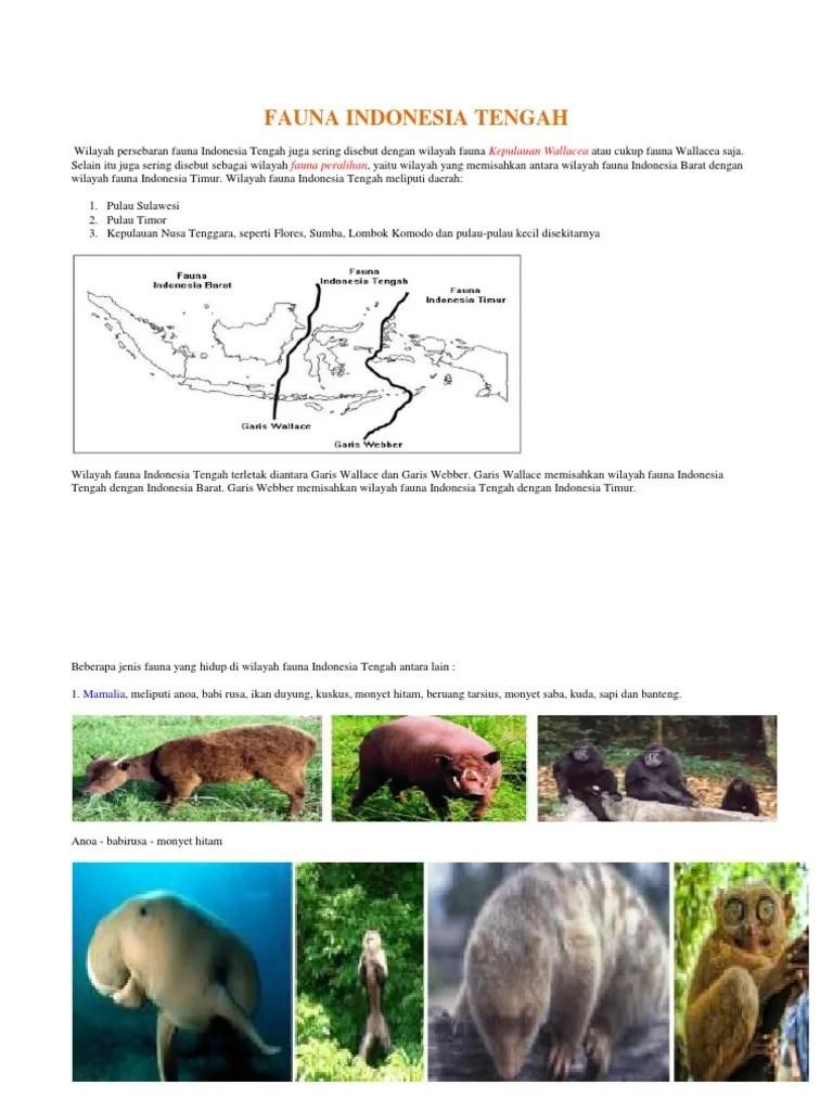 Persebaran Fauna Paleartik : persebaran, fauna, paleartik, Gambar, Fauna, Wilayah, Paleartik, Terbaru, Hewan