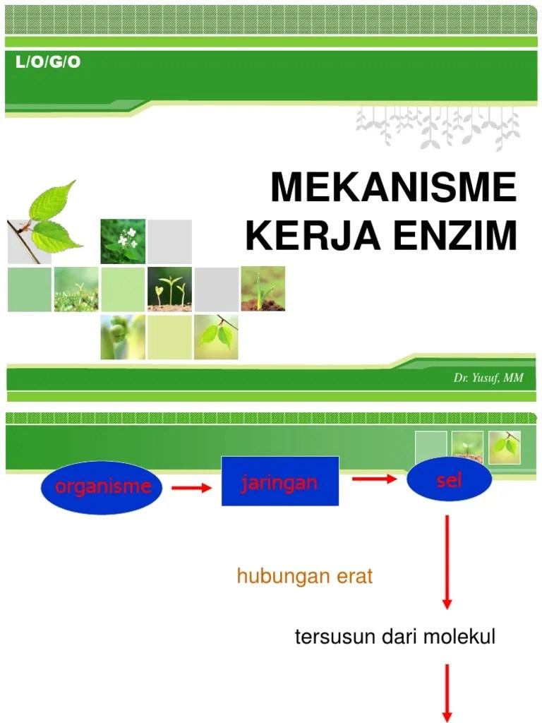 Kerja Enzim : kerja, enzim, MEKANISME, KERJA, ENZIM