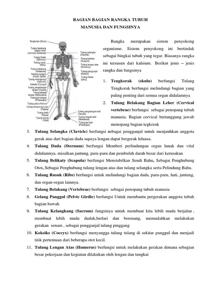 Fungsi Tulang Jari Kaki : fungsi, tulang, Tulang, Fungsinya, Adalah, Zafrina, Cute766