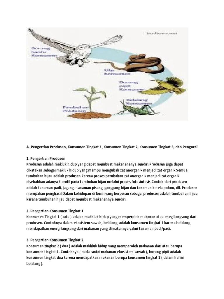 Rantai Makanan Di Sawah : rantai, makanan, sawah, Ekosistem, Sawah, Contoh, Rantai, Makanan, Spots