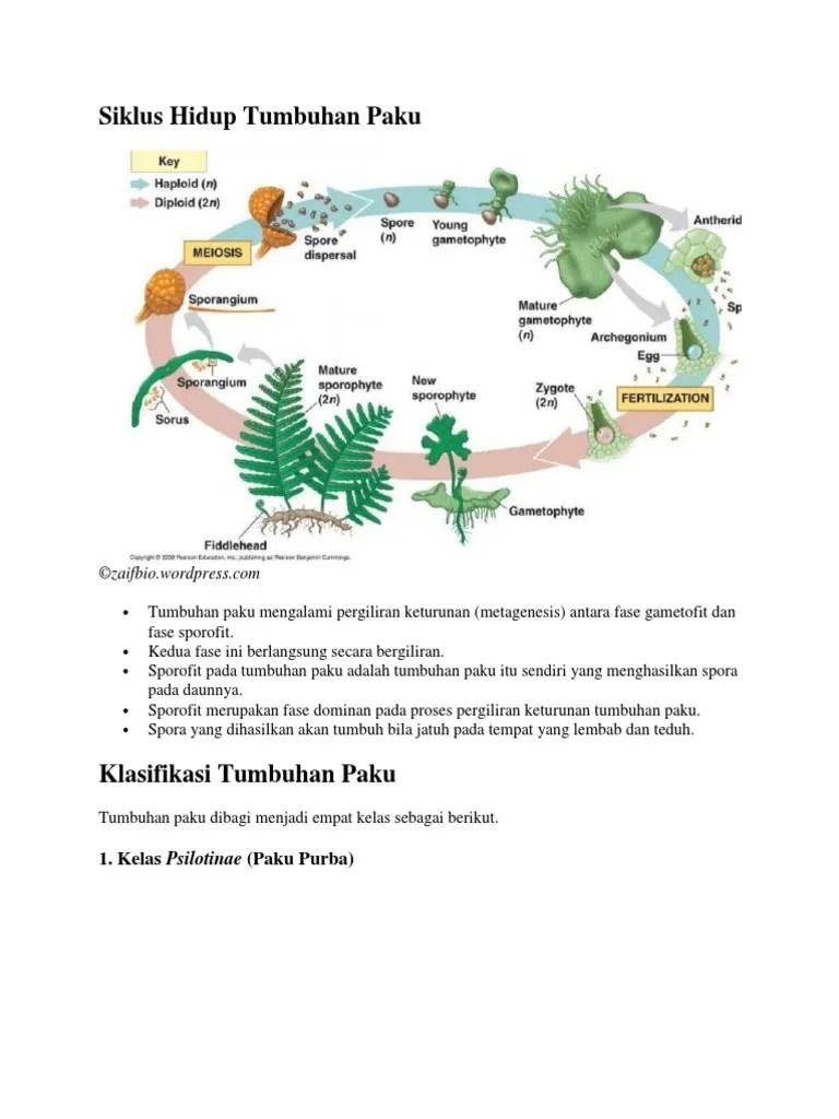 Siklus Tumbuhan Paku : siklus, tumbuhan, Siklus, Hidup, Tumbuhan