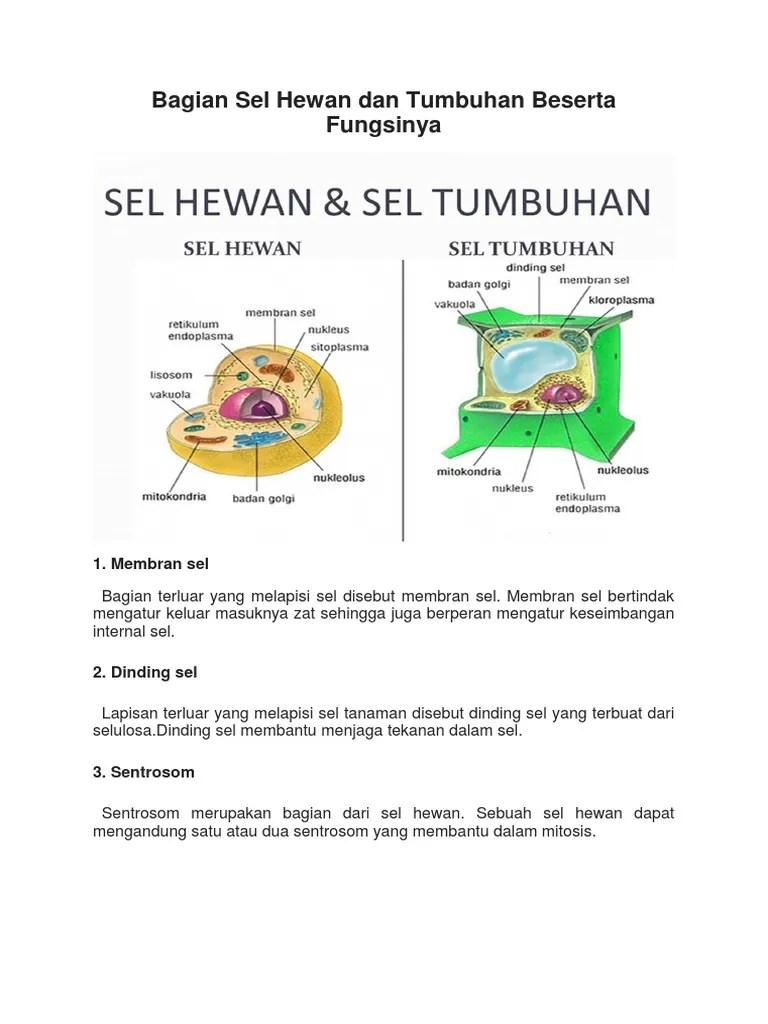 Organel Sel Hewan Dan Tumbuhan : organel, hewan, tumbuhan, Bagian, Hewan, Tumbuhan, Beserta, Fungsinya