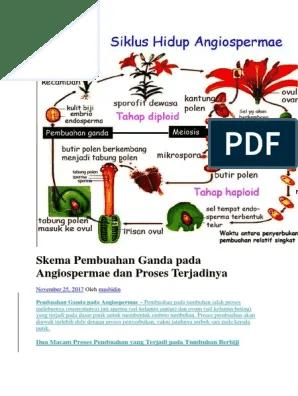 Pada Pembuahan Ganda Angiospermae Terjadi Peristiwa : pembuahan, ganda, angiospermae, terjadi, peristiwa, Skema, Pembuahan, Ganda, Angiospermae, Proses, Terjadinya