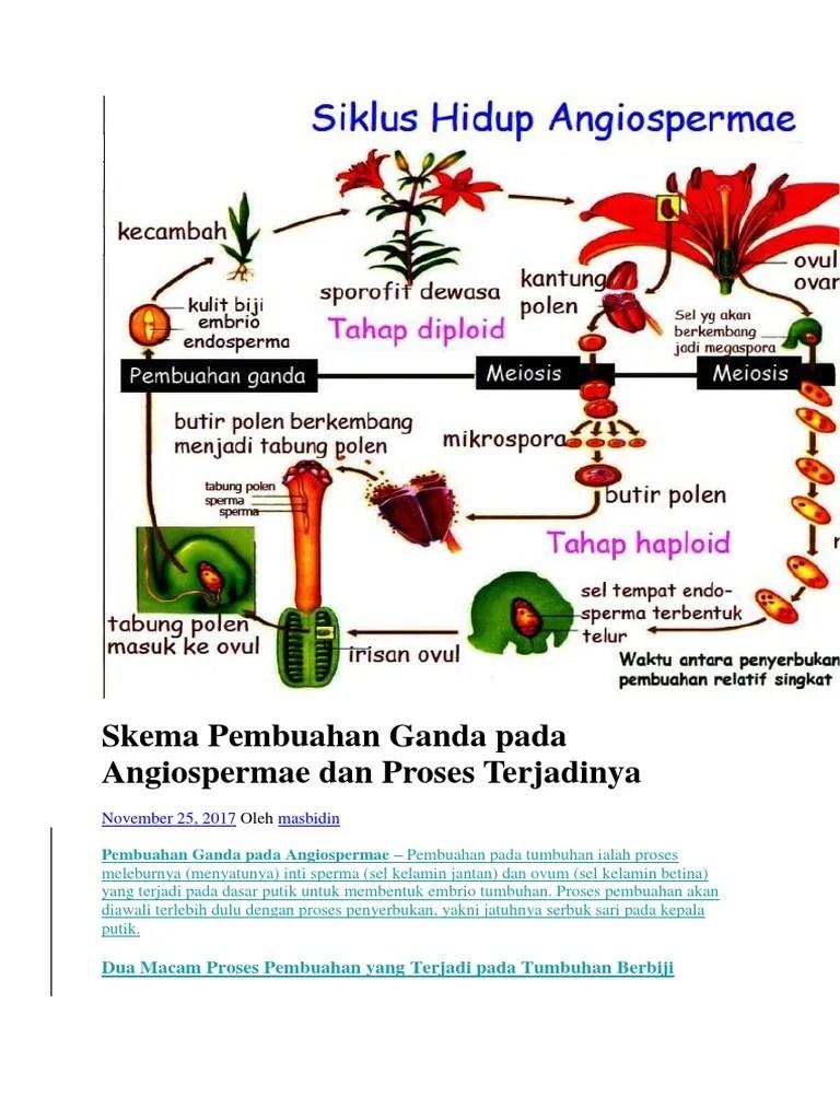 Pembuahan Ganda Terjadi Pada Tumbuhan : pembuahan, ganda, terjadi, tumbuhan, Skema, Pembuahan, Ganda, Angiospermae, Proses, Terjadinya