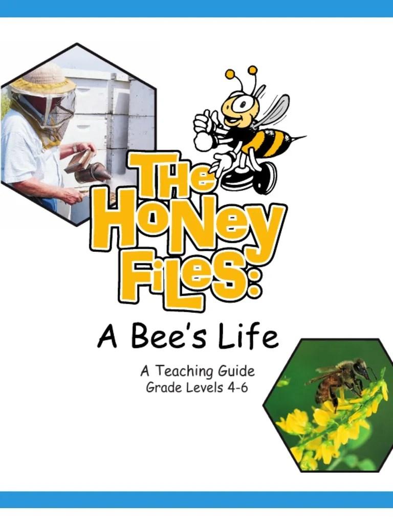 hight resolution of Worksheets Honey   Honey Bee   Bees