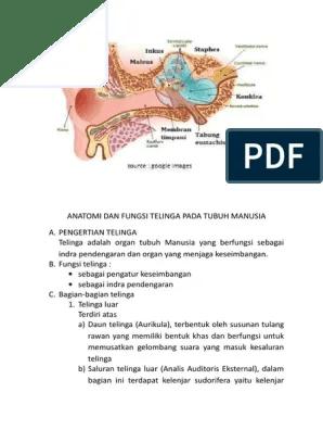 Bagian Telinga Untuk Keseimbangan : bagian, telinga, untuk, keseimbangan, ANATOMI, FUNGSI, TELINGA, TUBUH, MANUSIA.docx