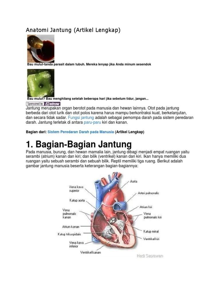 Gambar Bagian Jantung Dan Fungsinya : gambar, bagian, jantung, fungsinya, Gambar, Jantung, Keterangan, Bagian, Bagiannya
