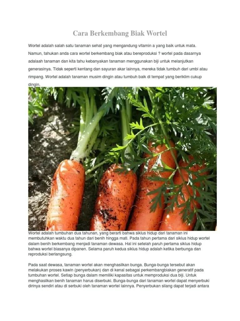 Cara berkembang biak tanaman wortel? - Brainly.co.id