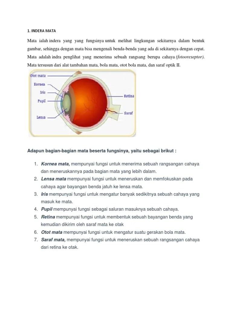 Gambar Mata Dan Fungsinya : gambar, fungsinya, Gambar, Beserta, Bagian, Fungsinya, Tempat, Berbagi