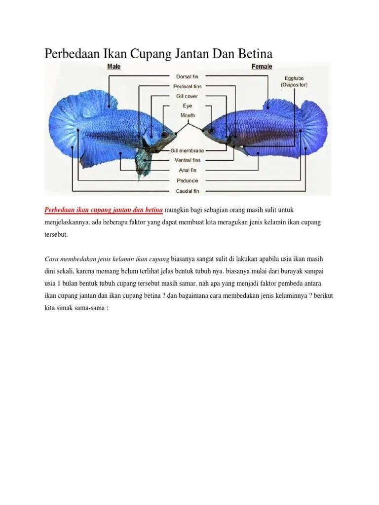 Perbedaan Ikan Cupang Jantan Dan Betina : perbedaan, cupang, jantan, betina, Perbedaan, Cupang, Jantan, Betina