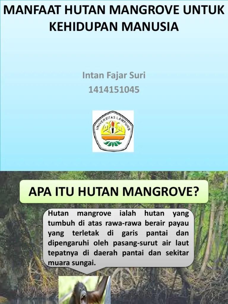 10 Manfaat Hutan Bagi Manusia dan Lingkungan