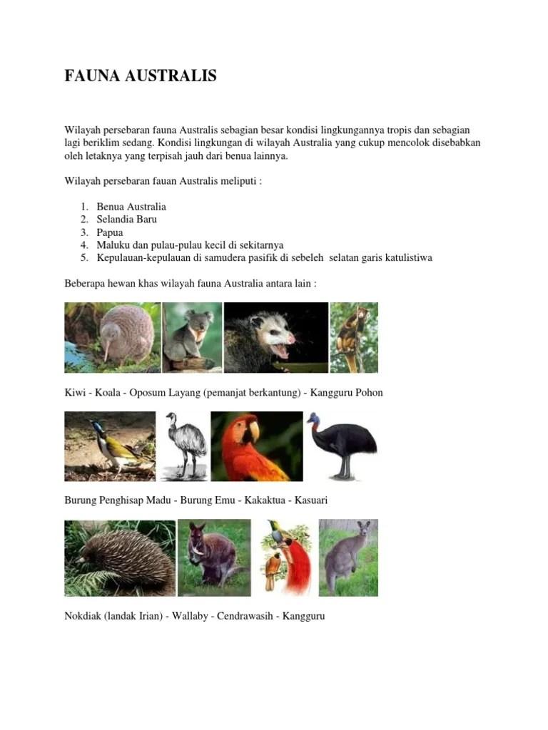 Ciri Ciri Fauna Tipe Australis : fauna, australis, Fauna, Australis