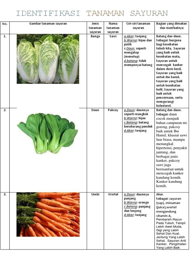 Contoh Tanaman Sayuran Daun : contoh, tanaman, sayuran, 245886961, Identifikasi, Tanaman, Sayuran