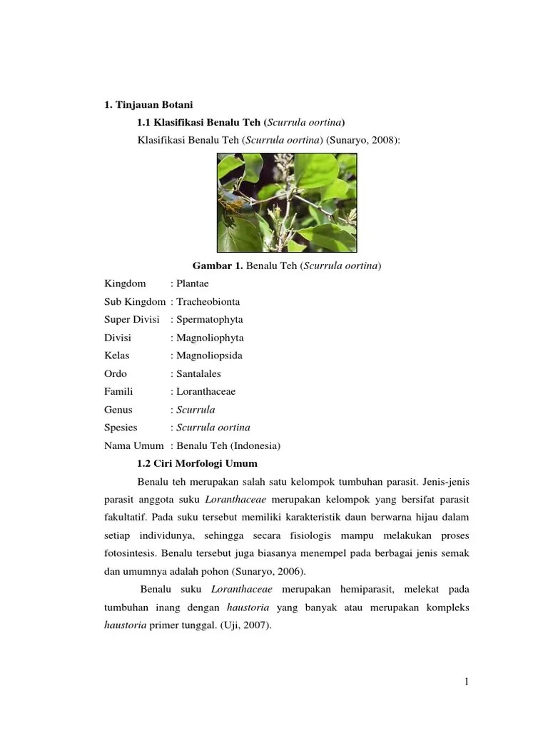 Klasifikasi Benalu : klasifikasi, benalu, Contoh, Laporan