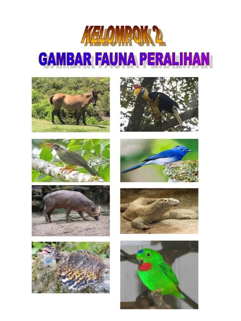 Fauna Peralihan - Pengertian, Contoh Hewan di Indonesia