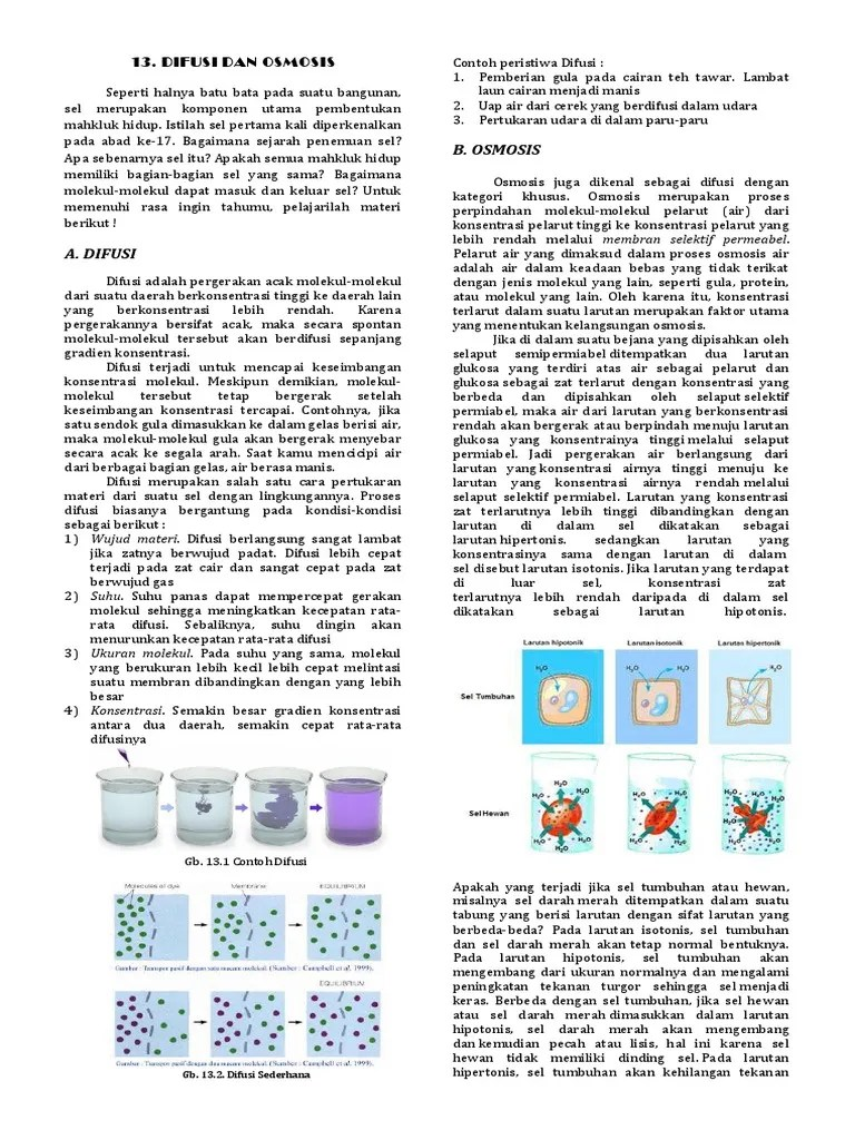 Osmosis Dan Difusi : osmosis, difusi, Handout, Difusi, Osmosis