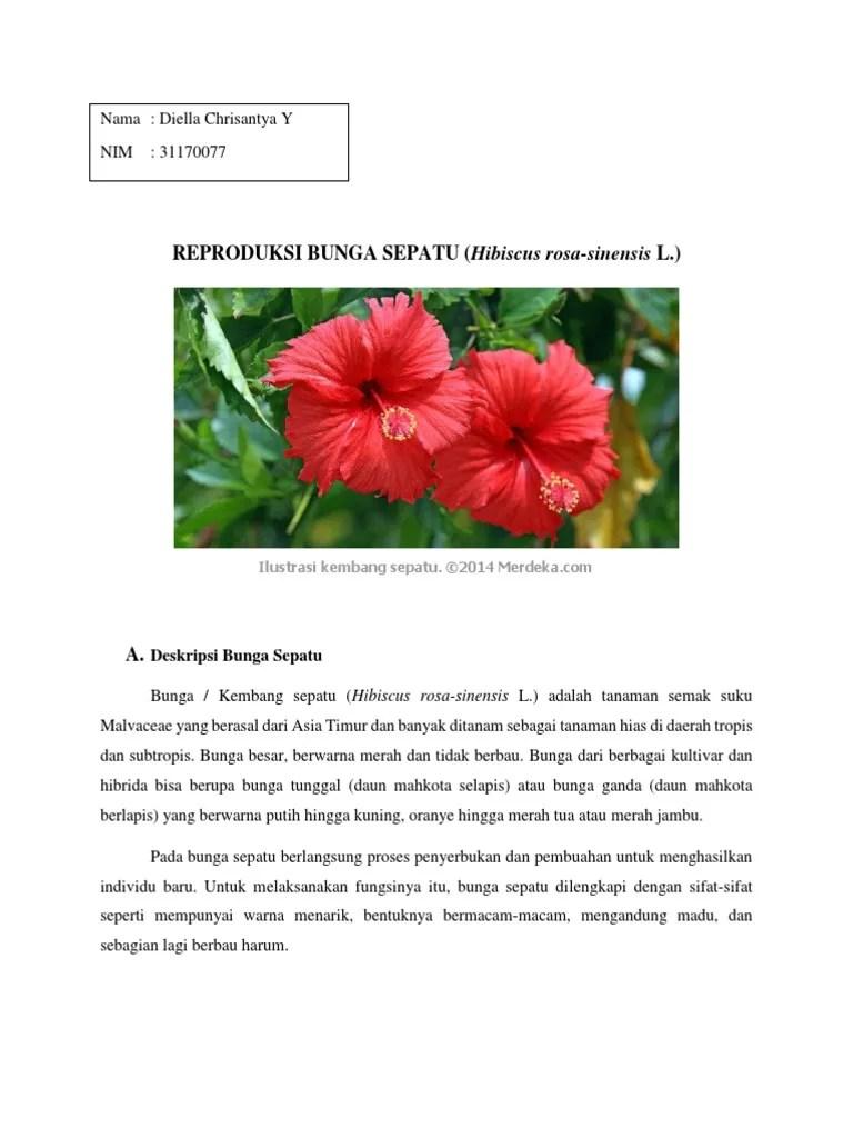 Kembang Sepatu Dan Kupu Kupu : kembang, sepatu, 373100317-REPRODUKSI-BUNGA-SEPATU.docx