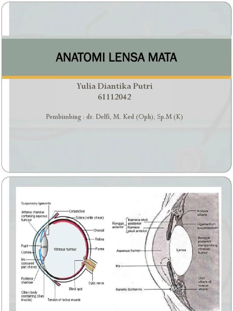Anatomi Mata Pdf : anatomi, Gambar, Anatomi, Lensa, Juwitala
