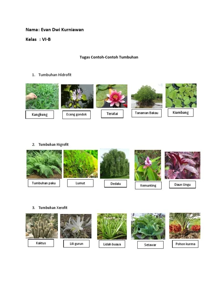 Contoh Tumbuhan Hidrofit : contoh, tumbuhan, hidrofit, Contoh, Tumbuhan.docx