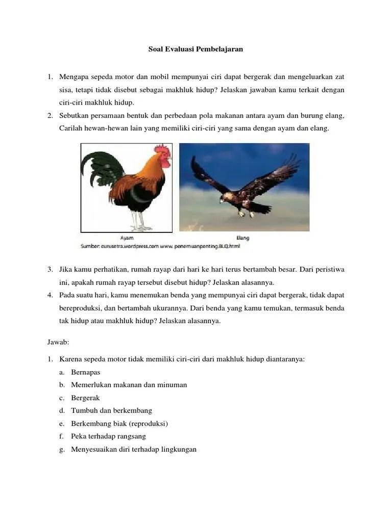 Sebutkan Persamaan Bentuk Dan Perbedaan Pola Makan Antara Ayam Dan Burung Elang : sebutkan, persamaan, bentuk, perbedaan, makan, antara, burung, elang, Sebutkan, Persamaan, Bentuk, Perbedaan, Makanan, Antara, Burung, Elang, Berbagi, Penting
