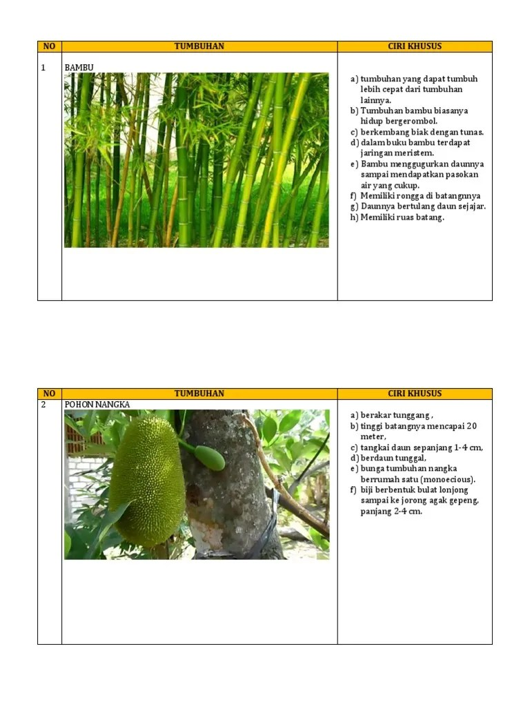 Tanaman Yang Berkembang Biak Dengan Tunas : tanaman, berkembang, dengan, tunas, Gambar, Tumbuhan, Berkembang, Dengan, Tunas, Tempat, Berbagi